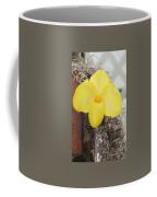 Paphiopedilum Fumis Gold Coffee Mug