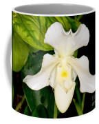 Paphiopedilum Orchid Coffee Mug