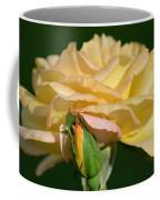 Pastel Rose Ruffles Coffee Mug