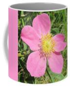 Pasture Rose Rosa Carolina Coffee Mug
