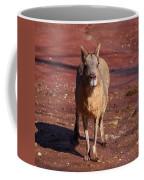 Patagonian Mara Coffee Mug