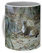 Bobcat Coffee Mug by Mae Wertz