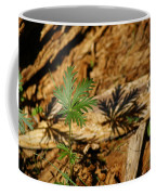 Peaceful Shadow In The Woods Coffee Mug