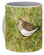 Pectoral Sandpiper Coffee Mug
