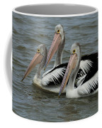 Pelicans In Australia 3 Coffee Mug