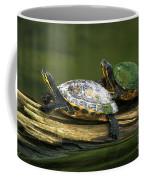 Peninsula Cooter Turtles Coffee Mug
