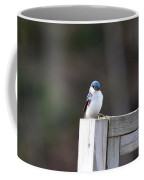 Pensive Tree Swallow Coffee Mug