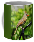 Perched Cardinal Coffee Mug