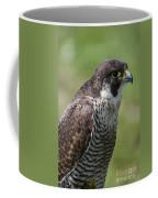 Peregrine Falcon 1 Coffee Mug
