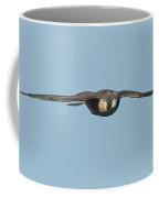 Peregrine Falcon Juvenile Coffee Mug