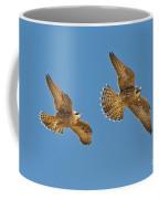 Peregrine Siblings Chasing Each Other Coffee Mug