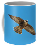 Peregrine Young Screaming For Food Coffee Mug