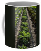 Perfect Lines Coffee Mug by Anne Gilbert