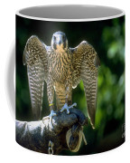 Perigrine Falcon Coffee Mug