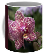 Phalaenopsis Helen Alice Mary 2308 Coffee Mug