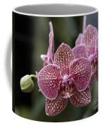 Phalaenopsis Helen Alice Mary 2346 Coffee Mug