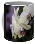 Phalaenopsis Ming Chao Dancer   8585 Coffee Mug