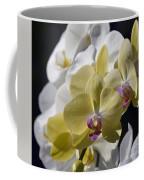 Phalaenopsis Orchids 2777 Coffee Mug
