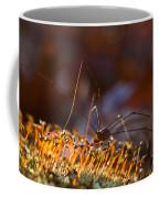 Phalangid Among The Moss Capsules Coffee Mug