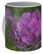 Phlox Nicky Coffee Mug