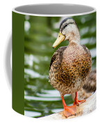 Picture Perfect - Mallard Duck Coffee Mug