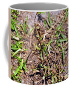 Picturesque Pondhawk Coffee Mug