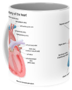 Pig And Human Heart Illustrations  Coffee Mug