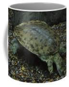 Pig-nosed Turtle Coffee Mug
