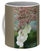 Pink And Green Hydrangea Closeup Coffee Mug