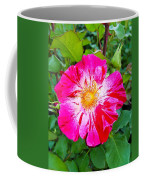 Pink And Red Striped Rose Coffee Mug