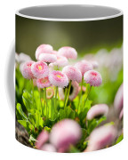 Bellis Perennis Pomponette Called Daisy Blooming  Coffee Mug