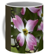 Pink Dogwood Blossom Up Close Coffee Mug