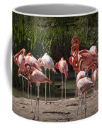 Pink Falmingos At The San Diego Zoo Coffee Mug