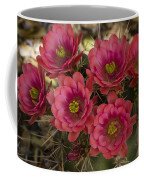 Pink Hedgehog Cactus Flowers  Coffee Mug