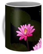 Pink Lilies And Pads Coffee Mug