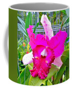 Pink Orchid At Maerim Orchid Farm In Chiang Mai-thailand Coffee Mug