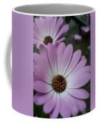 Pink Osteospermum Coffee Mug