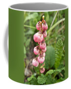 Pink Pyrola On Alpine Tundra Trail By Eielsen Visitor's Center In Denali Np-ak Coffee Mug