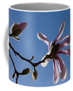 Pink Spring - Blue Sky And Magnolia Blossoms Coffee Mug