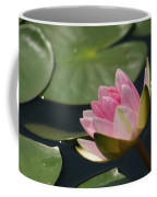 Pink Tilt... Coffee Mug