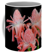 Pink Torch Ginger Trio On Black Coffee Mug