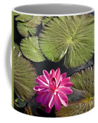 Pink Water Lily II Coffee Mug