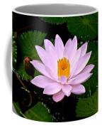 Pinkish Lotus Flower Coffee Mug
