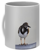 Ruddy Turnstone Coffee Mug