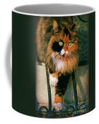 Pirate Kitty Coffee Mug