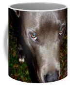 Pit Bull - 1 Coffee Mug