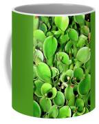 Pitcher Plants Palm Springs Coffee Mug