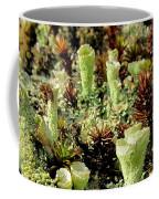 Pixie Cup Lichenscape Coffee Mug