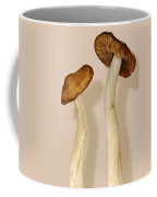 Plant - Mushrooms - I'm So Proud Of My Daughter Coffee Mug by Mike Savad