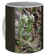 Plantain-leaved Pussytoes Wildflowers - Antennaria Plantaginifolia Coffee Mug